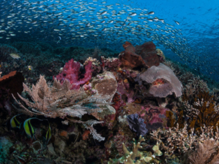 impressions taken while scuba diving in Komodo Indonesia