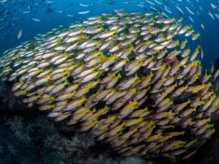 a school of fish underwater in Raja Ampat Indonesia