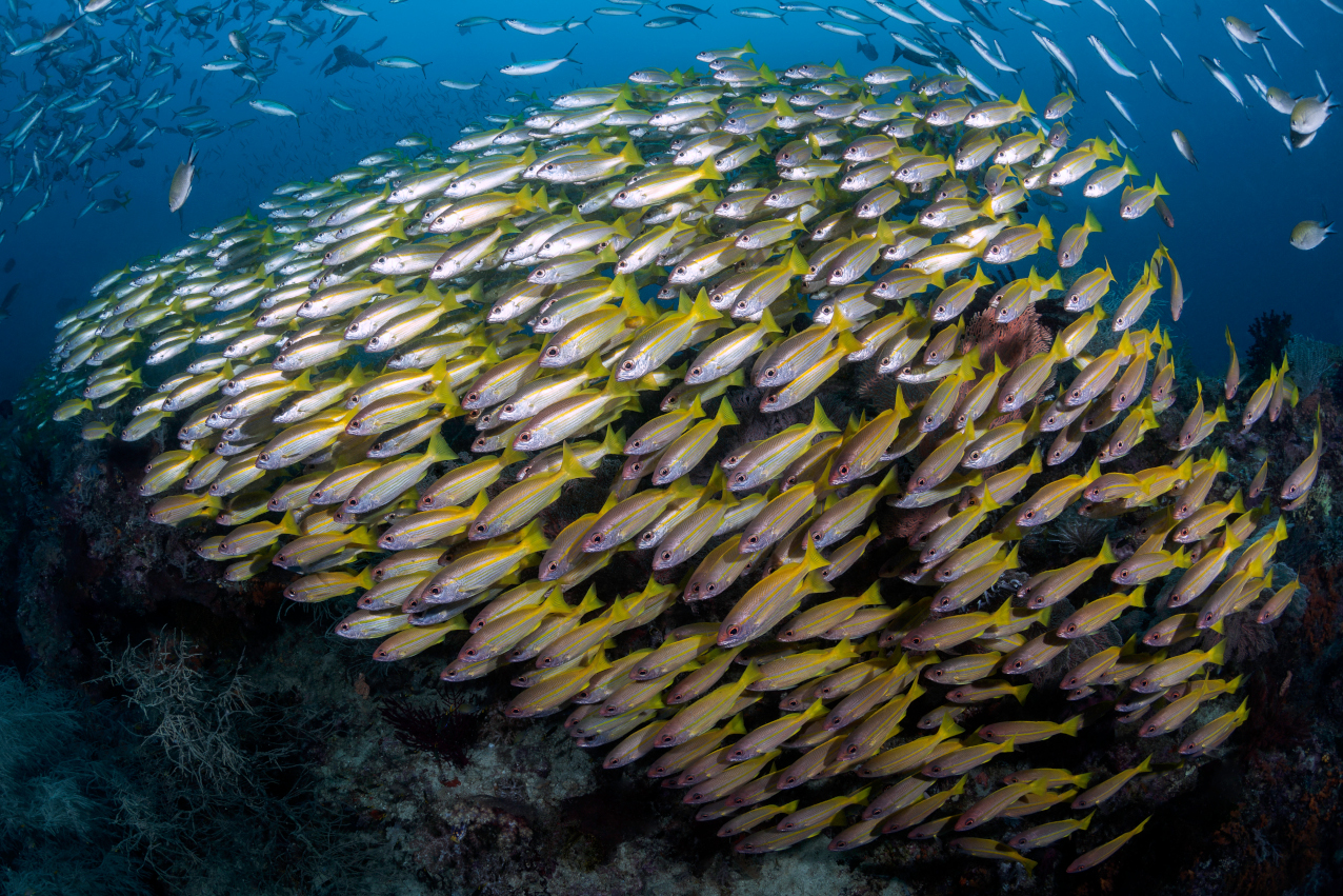 a school of fish underwater in Raja Ampat Indonesia