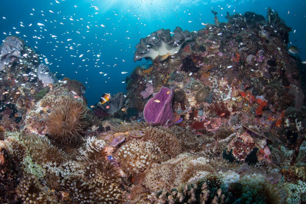 Coral Landscape in Alor Underwater Coralia Liveaboard Indonesia