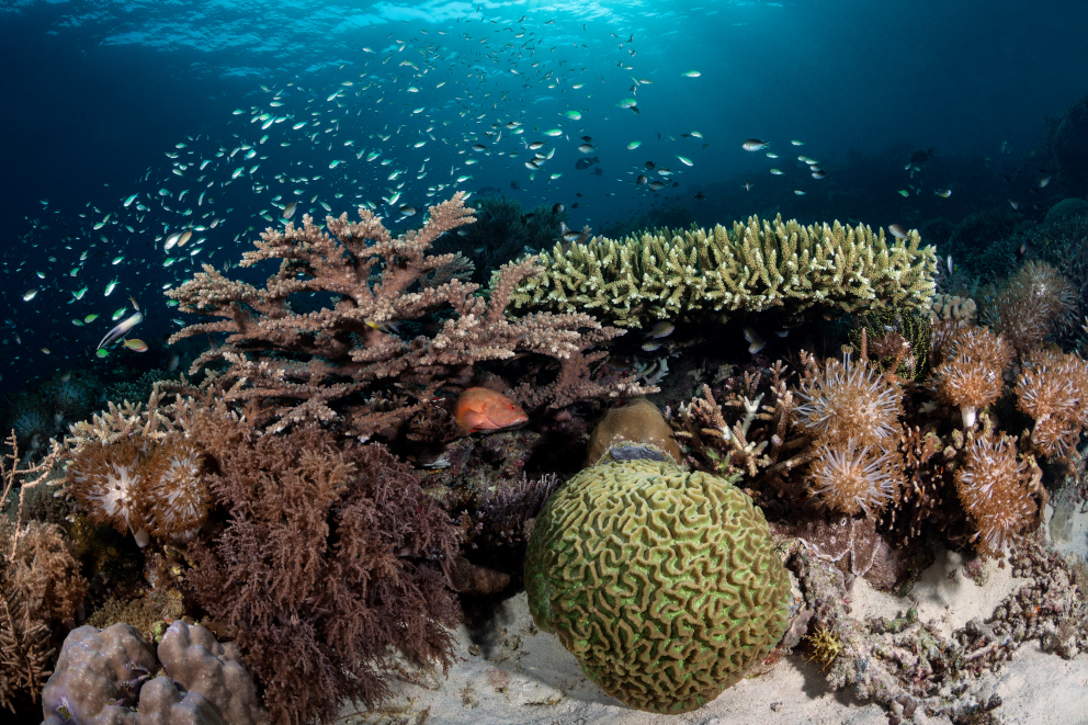 Corals underwater at Forgotten Islands in Indonesia