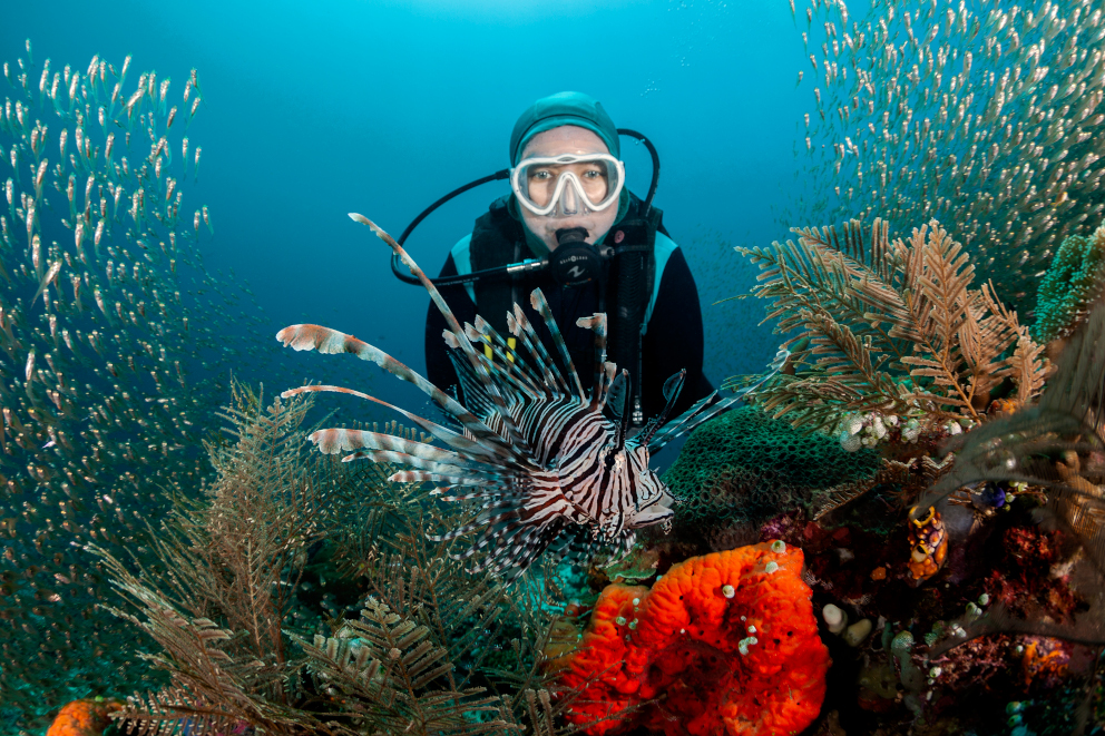a scuba diver watching a lion fish in between corals and glassfish underwater at Halmahera in Indonesia
