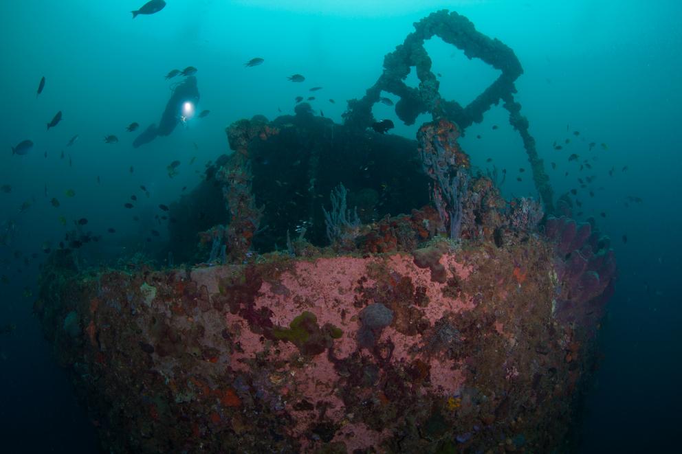 SS Duke of Sparta wreck in Ambon Bay Coralia Liveaboard Indonesia by Debbie Arriaga